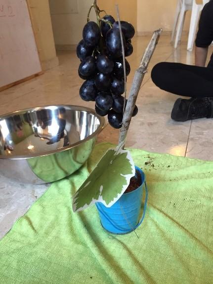לומדים תהליך הכנת יין